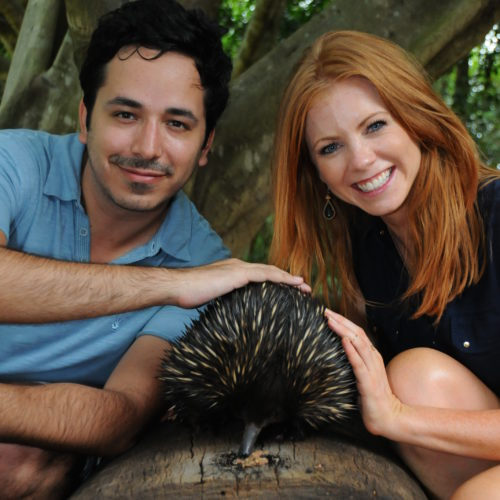 Prickles the short-beaked echidna