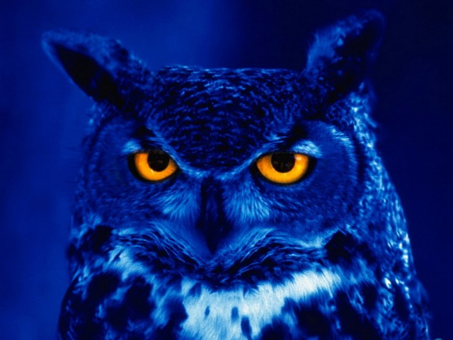 night_owl_1
