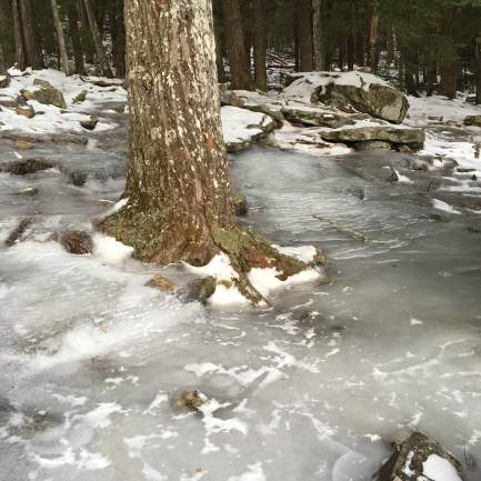 Ice in the woods at The Glade.