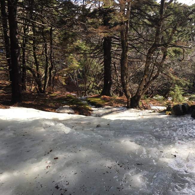 There were some icy spots on the Brook Trail - this was the largest one I came across.