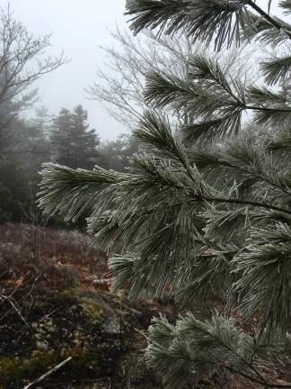 Even more frosty pine!