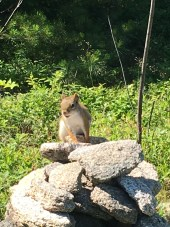 Along the Ridge trail, I came across this squirrel on top of a cairn. He sat there for quite a while letting me take his picture.