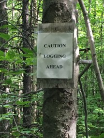 The sign was up, but no logging was going on. Actually, it didn't look like any logging had been done recently - though I did see some smaller cleared areas.