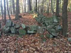 Remnants of a stone fence, which I assume is an artifact from the land's days as a sheep pasture.