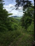 Heading back down the new trail to Reed Road, there's a peek-a-boo view of Belknap and Gunstock.