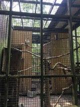 Hawks in their enclosure.