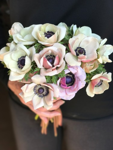 anemones grown by LynnVale Studios