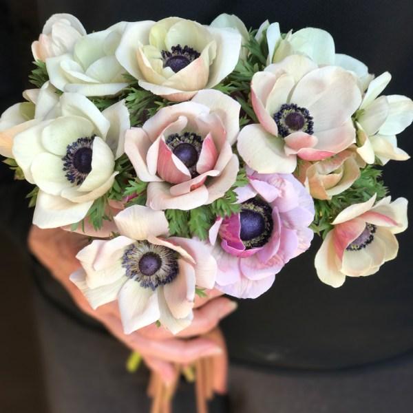 anemones grown by LynnVale Studios