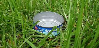 tuna can lawn