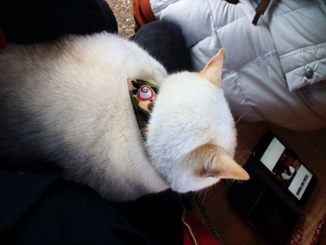 冬の猫寺、御誕生寺の膝上に乗っかる猫に御朱印帳、猫好きの聖地を堪能する!