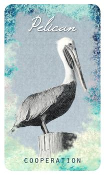 Pelican – The Ocean Oracle by Lyn Thurman