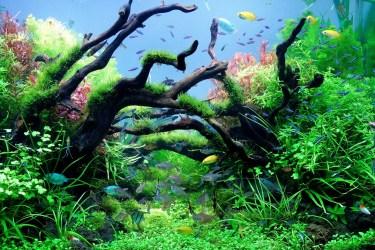 熱帯魚の混泳は組み合わせが大事。生活層と性格を考え選び出す