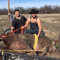 790 Pound Hog Captured in Texas