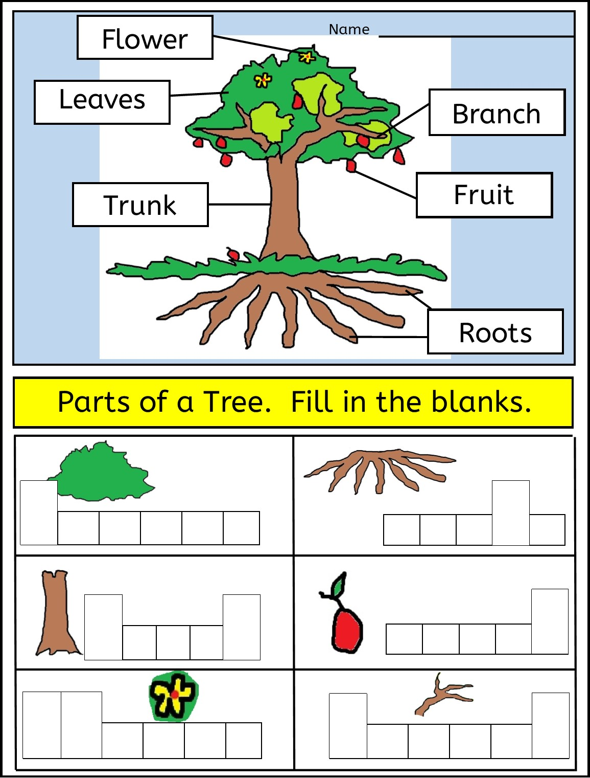 Worksheet Parts Of A Tree Worksheet Grass Fedjp Worksheet Study Site
