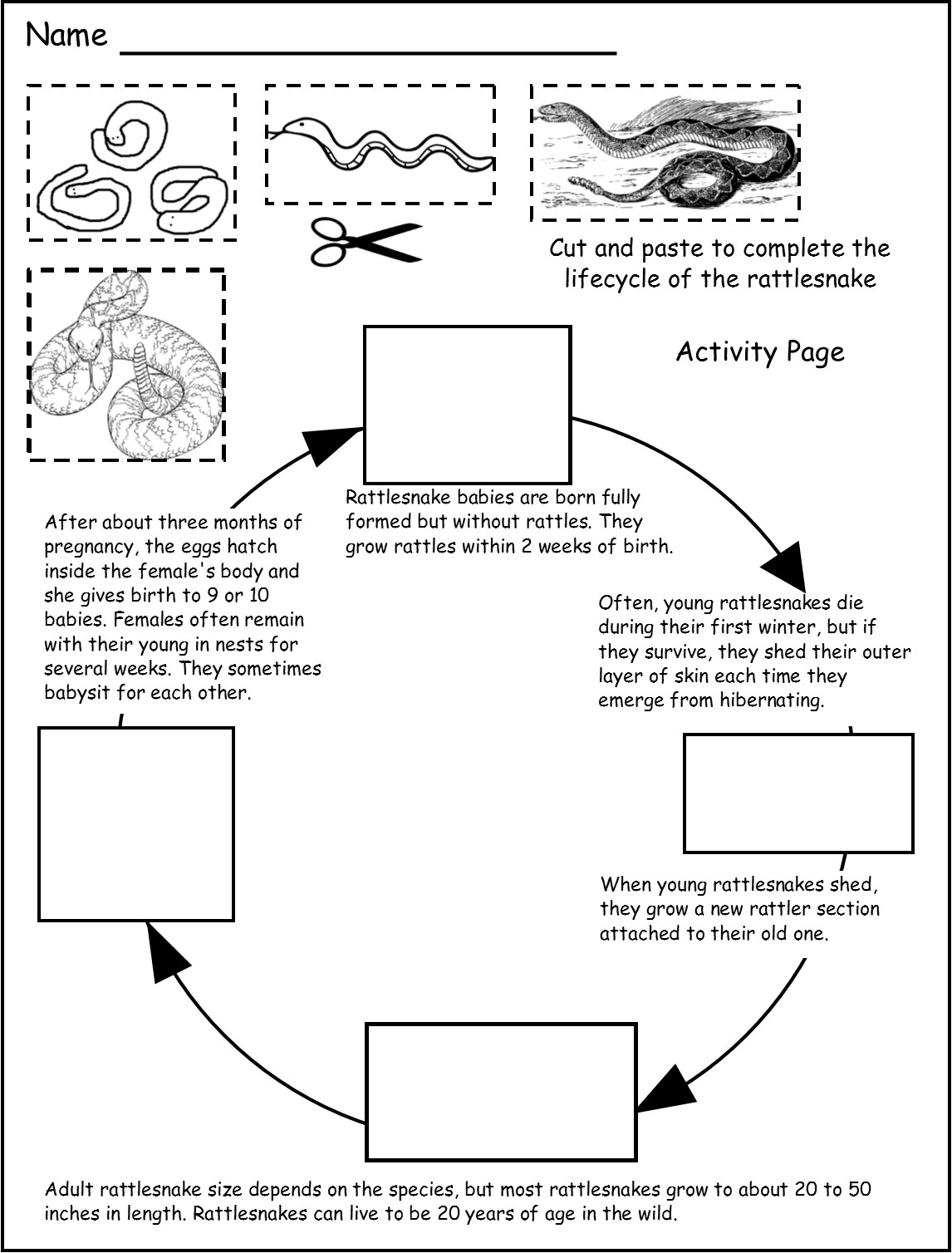 lizard life cycle diagram western plow solenoid wiring rattlesnake s the pictures to pin on pinterest