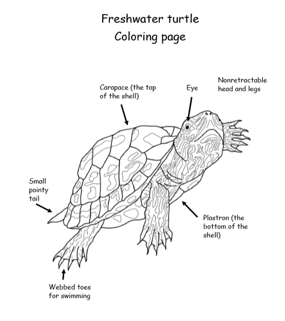 My Book About Turtles Grades 2-4, 38 Pages