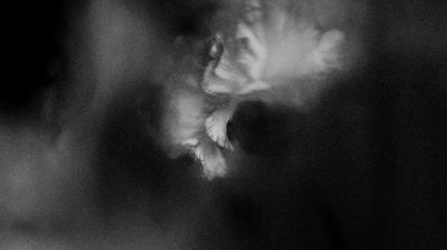 Holding Absence – Perish Lyrics