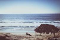 windansea hut la jolla san diego ocean 3