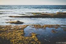 la jolla tidepools ocean san diego