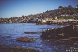 sea lions la jolla ocean