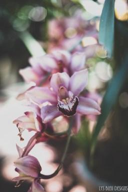 flowers orchids botanical garden balboa park