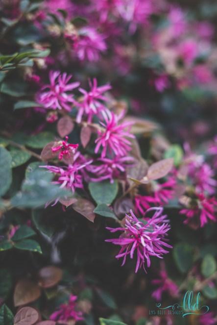flowers purple