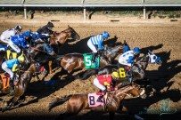 horse racing 2 w (47 of 57)