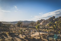 joshua tree - joshua tree national park - national park - nature photography - landscape photography - travel photography