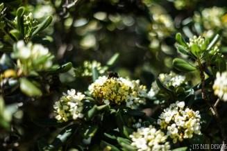 flowers bee bumblebee