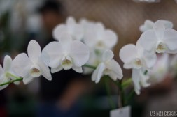 orchids w (51 of 101)