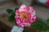 coronado flower show w (159 of 240)