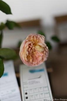 coronado flower show w (170 of 240)