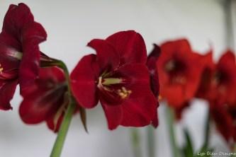 coronado flower show w (191 of 240)