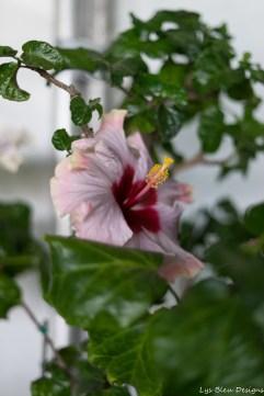 coronado flower show w (193 of 240)