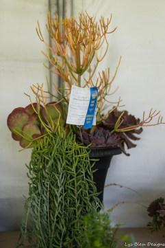 coronado flower show w (220 of 240)