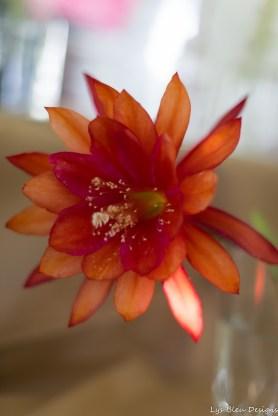 coronado flower show w (23 of 240)