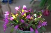 coronado flower show w (233 of 240)