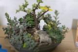 coronado flower show w (35 of 240)