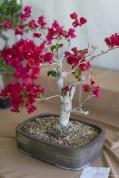coronado flower show w (87 of 240)
