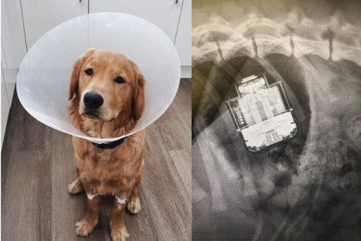 AirPods removed from dog's stomach, survive (the dog too)
