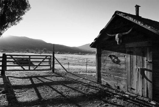 ranchmorning
