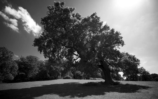 tree-sun-shade-1280x800