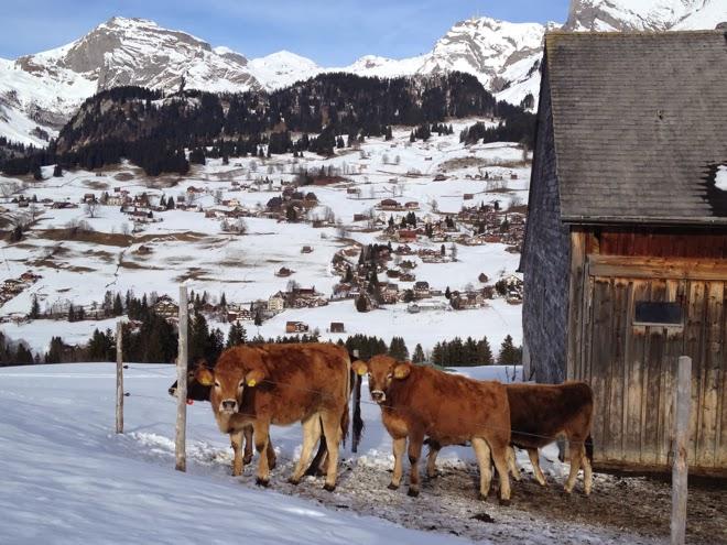 2014. Noch so jung. Warten. Ausschau halten. Kind, Fenster, Schnee, Berge. Kühe