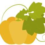 冬至にかぼちゃを食べるのはなぜ?運盛りって?いとこ煮って何?