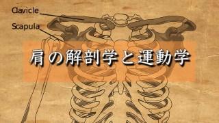 肩の解剖学