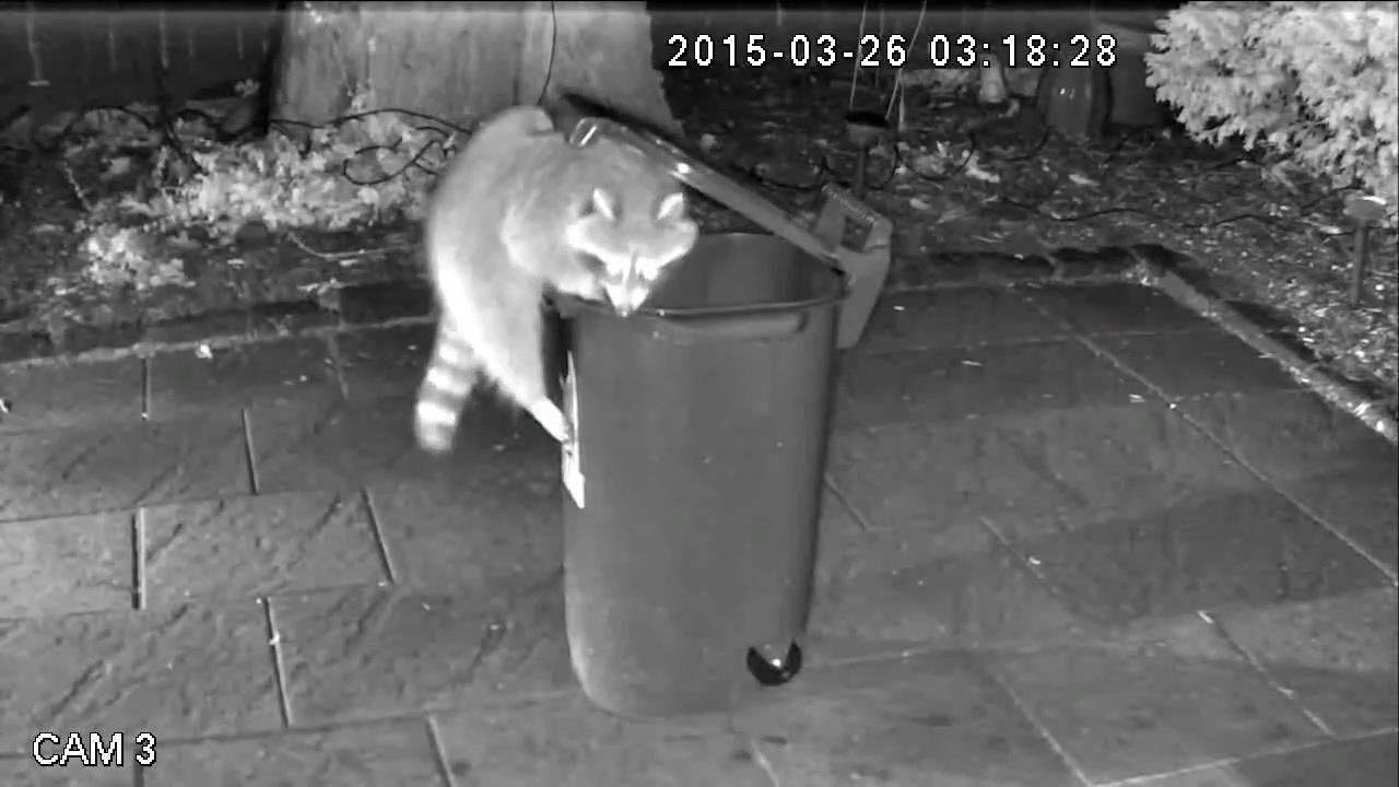 trash cans for kitchen outdoor equipment raccoon-proof in toronto