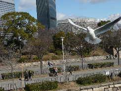 大阪城のかもめ