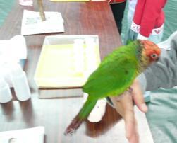 ペット王国2011