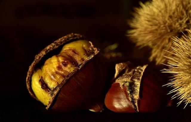 chestnut-3766690_640.jpg