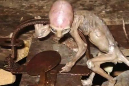 alienbaby.jpg